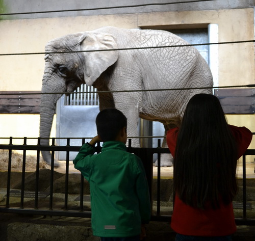 årskort til zoo aalborg