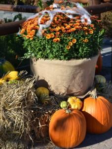 Djurs Sommerland er pyntet med 20.000 græskar til Magisk Halloween.